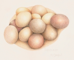 Dana's eggs, color pencil on paper
