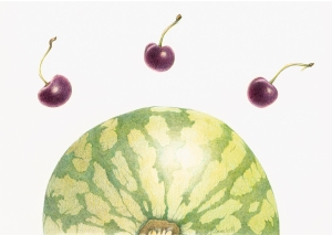 melon and cherries, color pencil on mylar