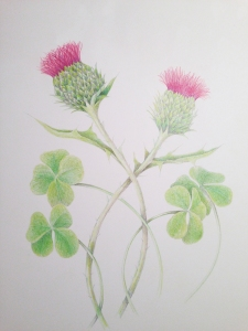 Thistle and Shamrock, color pencil on paper