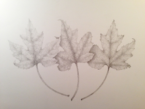 Maple leaves, graphite
