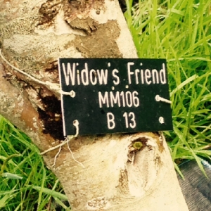 widows friend tag