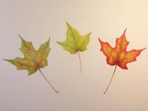 10-28 leaves