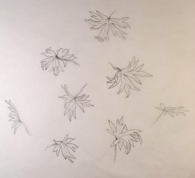 cranesbill leaves