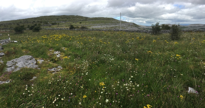 burren meadow