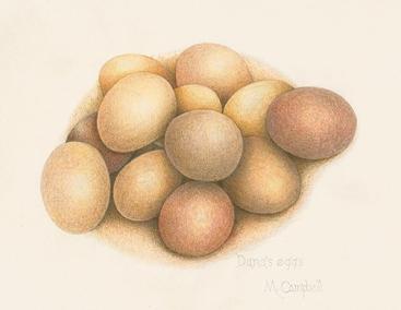 Dana's eggs