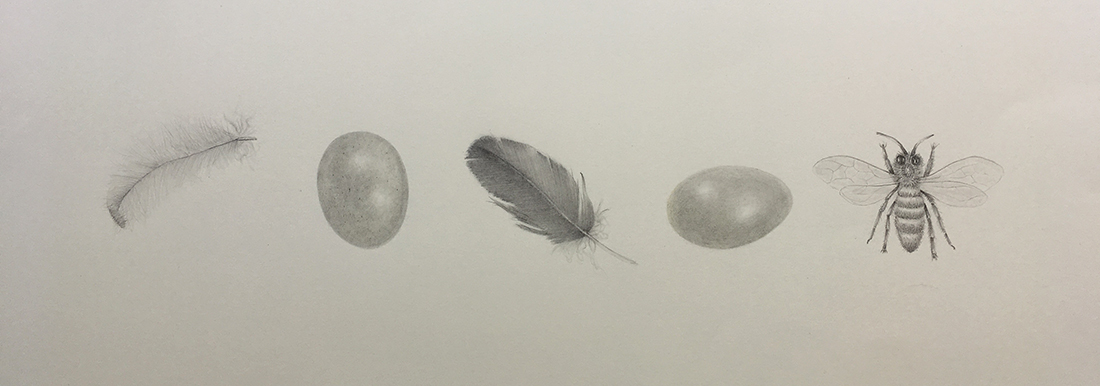 eggs-feathers